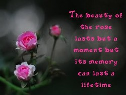 The beauty Of 
