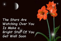 The Stars Are 
