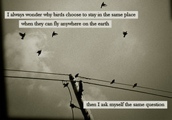 I alvvays wonder why birds choose to sny in the same place 