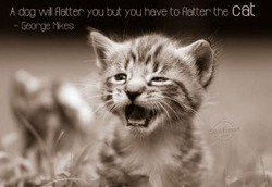 h Hatter you 3Jt you rave to Ratter tre cat