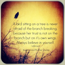 A. sitting on a tree is never 