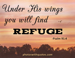 cunder Nis wings 