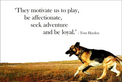 'They motivate us to play, 