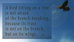 A bird sitting on a tree 
