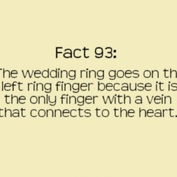 Fact 93: 