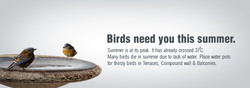 Birds need you this summer. 