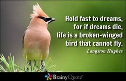 Hold fast to dreams, 