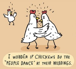 woNDCR IF CHICKENS Do THE