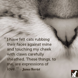 Vhave felt cats rubbing