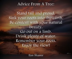 Advice From A Tree: 