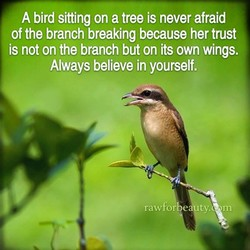 A bird sitting on a tree is never afraid 